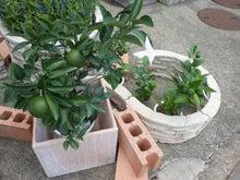 花屋のけんちゃんのブログ
