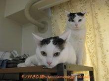 モノ好きな猫-猫も元気!