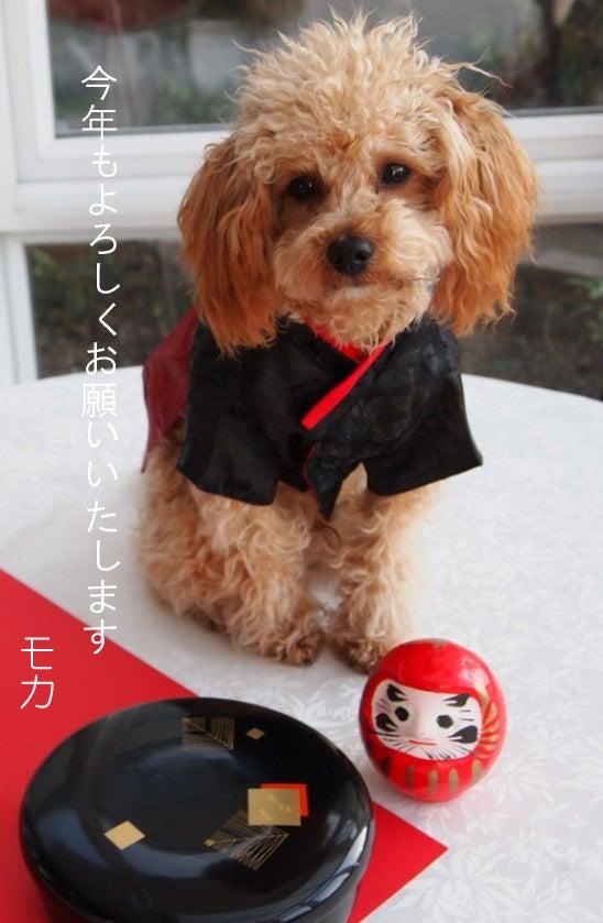 長澤家のトイプードルブログ-トイプードル モカの画像