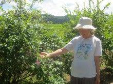 $とやま定住コンシェルジュ 3代目のブログ-家の周りで育てたブルーベリー、イチジク、リンゴ