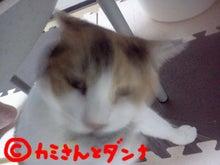 $カミさんとダンナの猫ブログ-あそぶにゃにゃ