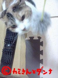 カミさんとダンナの猫ブログ-あそぶにゃ