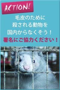 ビーガン&ベジタリアンショップ〜SHOP MOJO MOJO-毛皮のために殺される 動物を救おう!