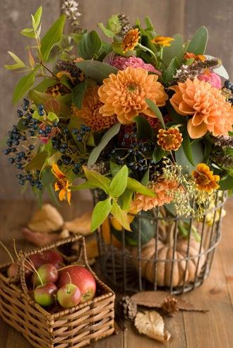 サブリナ~花と写真のある暮らし~-ダリア