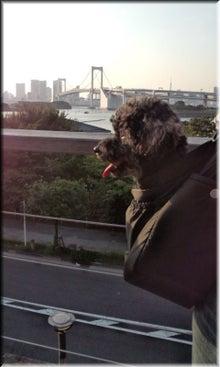 愛犬EVAとはち★の生活