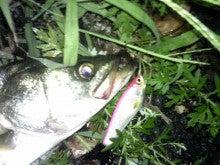 $Flowerの魚と遊ぶ日々-120923_040751.jpg