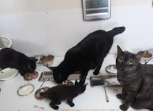 $猫惑星日誌-黒猫集合