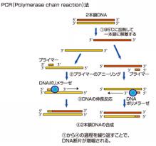 東京マイクロスコープ顕微鏡歯科☆オーラルハイジニストnaomi-PCR法