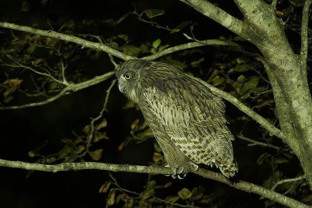 おかんと野鳥のオニゴッコ