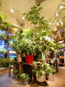 グリーンギャラリーガーデンズたまプラーザ店のブログ
