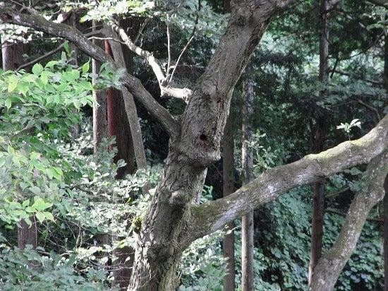 スーパーB級コレクション伝説-12.9.26-12