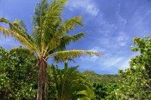 小笠原のエコツアー 小笠原旅行 小笠原観光 小笠原の情報と自然を紹介します-前浜