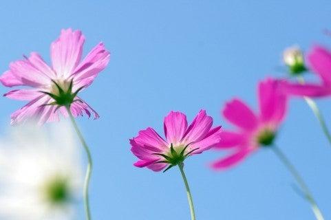 花咲く*やわらぎびと