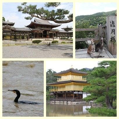 うぉっか★てきーら へべれけ生活-京都