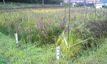 ♪自然農★不耕起・無肥料・草生栽培★は楽しいゾウ♪