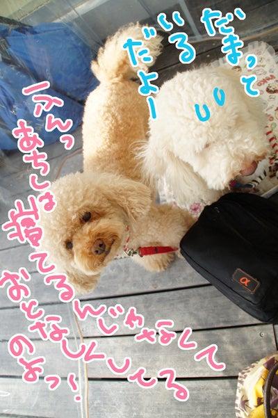 似顔絵師ぶぶはこのきまぐれブログ-5サーラプラザ浜松でペット似顔絵