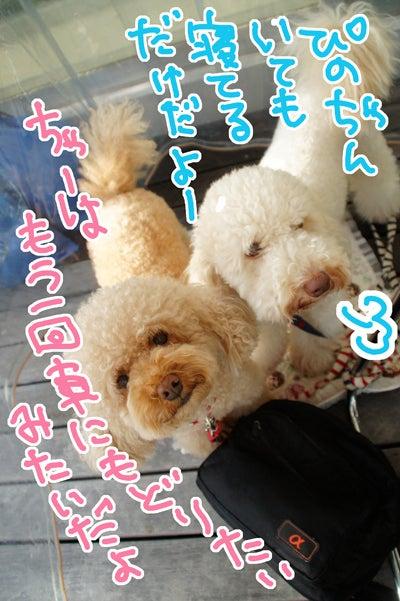 似顔絵師ぶぶはこのきまぐれブログ-3サーラプラザ浜松でペット似顔絵