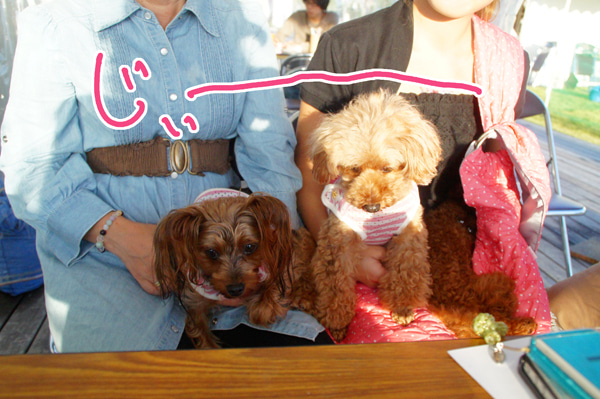 似顔絵師ぶぶはこのきまぐれブログ-2サーラプラザ浜松でペット似顔絵