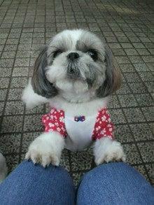 ヒーリングライフを愛犬と☆ドッグヒーリングサロン&カフェholoholoの日記♪