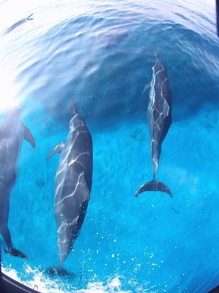 $イルカと泳ぐツアー!御蔵・ハワイでネイチャーヒーリング、イルカ画像もいっぱい【byイルカアルバム】