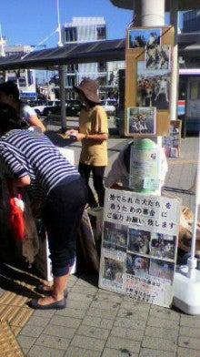 neko-daisuki-4023さんのブログ-P1010342.jpg