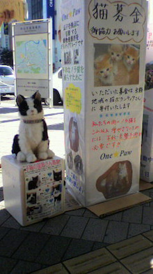 neko-daisuki-4023さんのブログ-P1010344.jpg