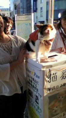 neko-daisuki-4023さんのブログ-P1010358.jpg
