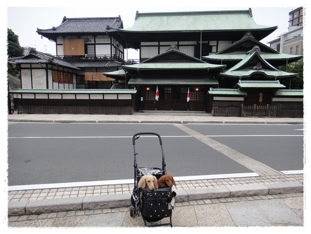 旅犬Lani&Leaのほほん風船記-道後温泉