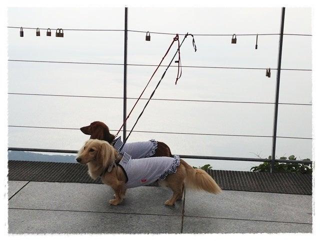 旅犬Lani&Leaのほほん風船記-しまなみ海道