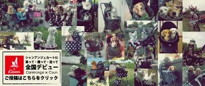 Caninange-天使のカート ユーザー 写真募集