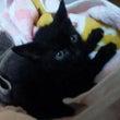 くろすけ(猫)の悪い…