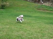 ゴロウマン-飛行犬