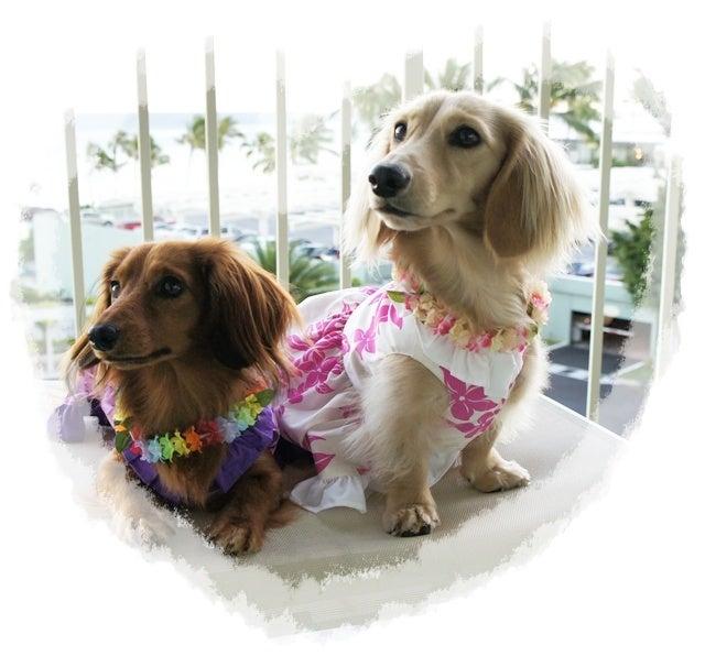 $旅犬Lani&Leaのほほん風船記-Lani&Lea