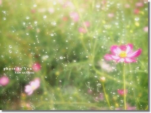 詩・画像詩ブログ【そのままで ~風の便り~】-36.2℃
