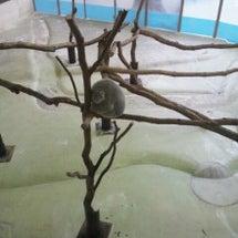 多摩動物公園にて