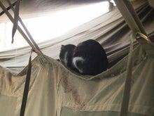 """NGOピースウィンズ・ジャパン スーダン駐在スタッフのブログ ナイルでまいる!南スーダン""""こにょこにょ""""レポート-テントで寝ている"""