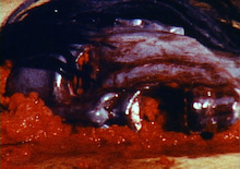 地獄の血みどろマッスルビルダー-02