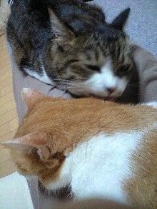 ずれずれブログ…湘南で猫と暮らせば…-121010_2251~0001.jpg
