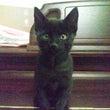 黒猫の赤ちゃん体重測…