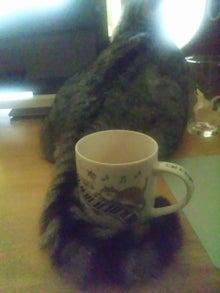$猫惑星日誌-ポワンのしっぽ