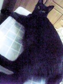 猫惑星日誌-ピー助1