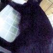 黒猫「ヤマト」がいつ…