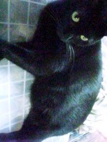 猫惑星日誌-ピー助2