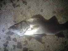 釣り人の日記-CA390889.JPG