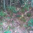 竹やぶの中へ