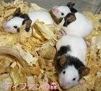 ティファンの森ブログ ー小動物専門ブリーダー・ショップー