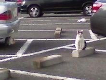 腐ってやがる・・・ぷログ-猫の国