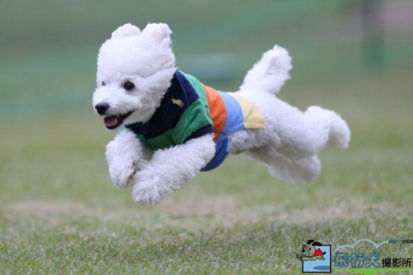 飛行犬撮影所 秋田支部