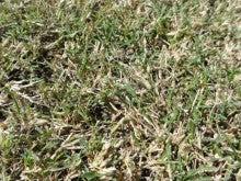 地域にひろがる「まちなか」の校庭芝生たち!-WOS121016-4