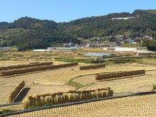 綾部畜産の生産者便り-DSC_0293.jpg
